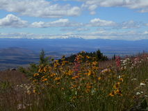 Wildflowers on Grizzly Mountain. View looking west from Grizzly Mountain in Central Oregon near Prineville. Mt. Jefferson in the distance and the Cascade Range stock photo