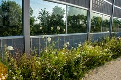 Wildflowers grow along a noise protection wall. A noise protection wall with solar array has wildflowers growing next to it stock images