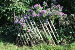 Wildflowers growing through fence Royalty Free Stock Image