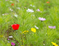 Wildflowers growing in a meadow Royalty Free Stock Photos