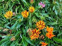 Wildflowers growing in South Africa