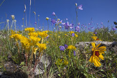 Wildflowers on Mountain Royalty Free Stock Photography
