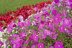 Wildflowers hermosos fotos de archivo