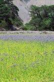 Wildflowers hermosos de Francia cerca de las gargantas Du Verdon imagen de archivo