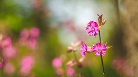 Wildflowers hermosos en naturaleza en primavera Fotografía de archivo