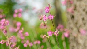 Wildflowers hermosos en naturaleza en primavera Fotos de archivo libres de regalías