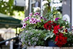 Wildflowers hermosos en un primer del pote Un ramo de primavera florece en un pote en la calle fotografía de archivo libre de regalías