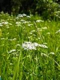 Wildflowers in het gras Royalty-vrije Stock Foto's