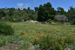 Wildflowers het Groeien in Santa Barbara Field in Californië stock afbeeldingen