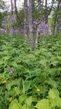 Wildflowers in het noorden van Zweden Stock Foto