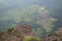 Wildflowers, Hiking in the Simien Mountains, Ethiopia Stock Photography