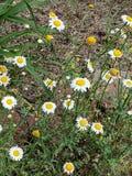 wildflowers immagine stock libera da diritti