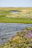 Wildflowers i pływowe zatoczki Zdjęcie Stock