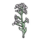 Wildflowers illustration Stock Images