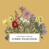 wildflowers Ilustração do vetor no estilo do vintage cartão festivo ilustração royalty free