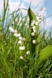 Wildflowers im Gras Lizenzfreies Stockfoto