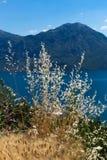 Wildflowers im Hintergrund von Bergen Ansichtskarteansicht der Küstenlinie der Boka-Kotorbucht, Montenegro Lizenzfreie Stockfotos