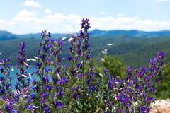 Wildflowers im Hintergrund von Bergen Ansichtskarteansicht der Küstenlinie der Boka-Kotorbucht, Montenegro Stockbild