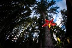 Wildflowers im Wald Stockfoto