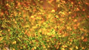 Wildflowers im Wind bei Sonnenuntergang stock footage
