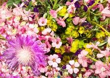 Wildflowers, imagem de fundo Imagens de Stock