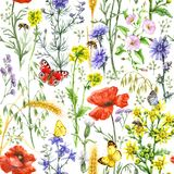 Wildflowers  and Insects Pattern. Hand drawn floral seamless pattern made with watercolor wildflowers, red poppies, ripe wheat ears, bees and butterflies. Summer Royalty Free Stock Photography