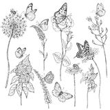Wildflowers  and insects sketch Royalty Free Stock Photos
