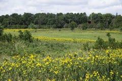 Wildflowers in Iowa Stock Afbeeldingen