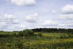Wildflowers in Iowa Royalty-vrije Stock Foto's
