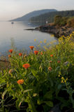 Wildflowers on an Island. Wildflowers blooming on Lummi Island during a beautiful sunrise in the Puget Sound area of the Pacific Northwest royalty free stock photo
