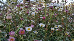 Wildflowers in israeli park. Little flowerbed Stock Photos