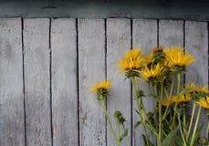 Wildflowers jaunes photo libre de droits