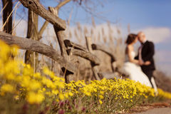Wildflowers jaunes avec des jeunes mariés Image stock