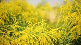 Wildflowers jaunes en parc sur le parterre aménagement banque de vidéos