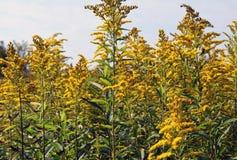 wildflowers jaunes sur un pré ensoleillé photos stock