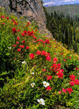 Wildflowers in Jewell Basin, MT Royalty-vrije Stock Foto