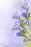 Wildflowers knapweed Royalty Free Stock Photography