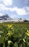 wildflowers kolor żółty fotografia royalty free