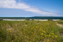 Wildflowers And Lake Superior Beach Royalty Free Stock Photo