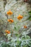 Wildflowers langs een Bergsleep royalty-vrije stock fotografie