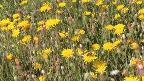 Wildflowers stock video footage