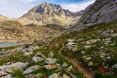 Wildflowers lungo la traccia di montagna 2 Immagini Stock