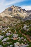 Wildflowers lungo la traccia di montagna Fotografie Stock