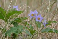 Wildflowers mauve-clair Photos stock