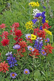 Wildflowers in meadow Stock Photography