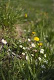 Wildflowers In Meadow Royalty Free Stock Photo