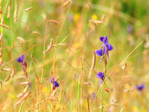 Wildflowers meadow in the field, selective focus, space in the zone blurring Stock Images