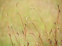 Wildflowers meadow in the field, selective focus, space in the zone blurring. Royalty Free Stock Images