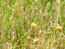 Wildflowers meadow in the field, selective focus, space in the zone blurring. Royalty Free Stock Photo