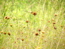 Wildflowers meadow in the field, selective focus, space in the zone blurring. Stock Images